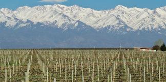 Vinhos e Azeites em Mendoza